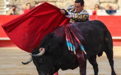 NÎMES – Feria des Vendanges – Jose Maria Manzanares convalescent déclare forfait…