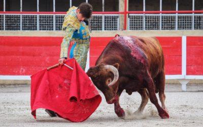 EL RAFI peaufine sa préparation avant la Feria des Vendanges…